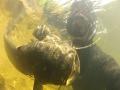 видео о подводной охоте