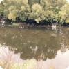 Река десна (алхимово)