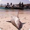 Акулы и подводная охота